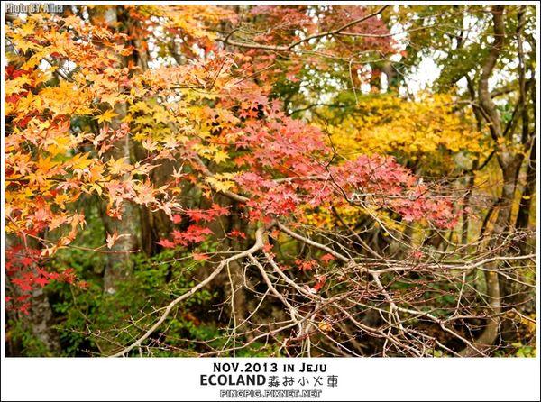 【濟州島景點】韓國 ECOLAND 에코랜드 森林小火車生態公園-初冬賞楓必遊景點 @Alina 愛琳娜 嗑美食瘋旅遊