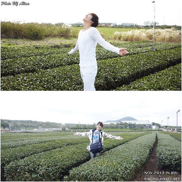 [ 濟州島自由行 ] O'SULLOC오설록雪綠茶博物館 李敏鎬.潤娥innisfree廣告拍攝地 @Alina 愛琳娜 嗑美食瘋旅遊