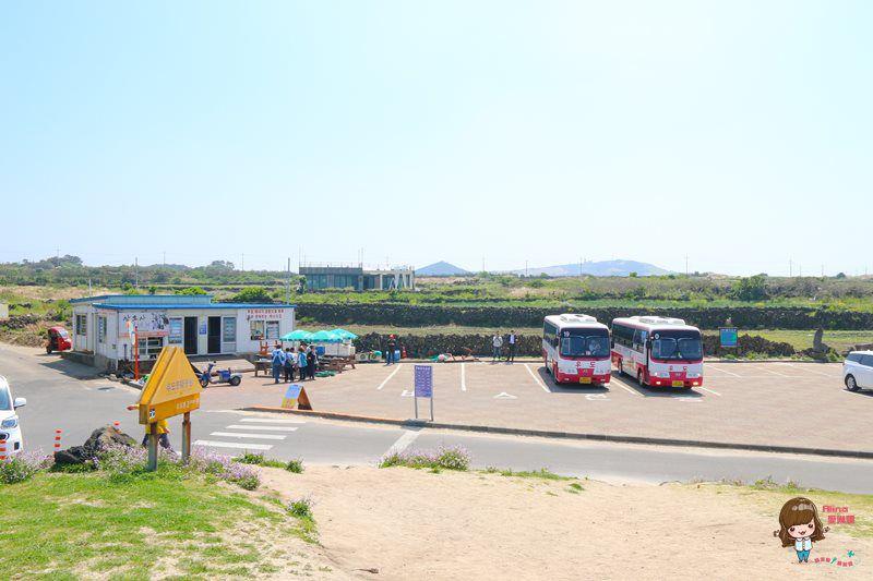【濟州島自由行】우도 牛島交通 怎麼去怎麼玩 島上觀光巴士路線 乘車搭船攻略