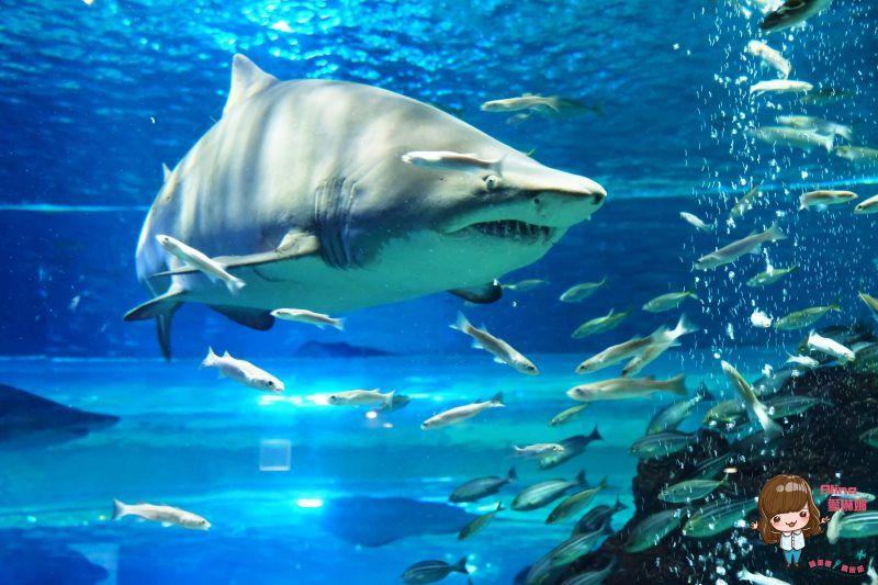 水上星球濟州水族館 Aqua planet jeju