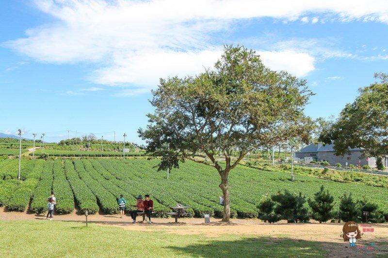 濟州島綠茶園