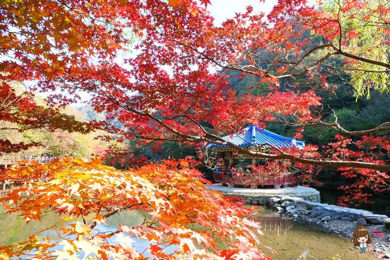內藏山賞楓