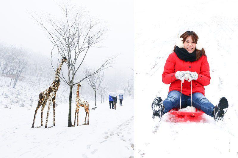 【冬天玩雪趣】韓國滑雪一日團 雪兜場滑雪好刺激 草莓農場現採現吃 @Alina 愛琳娜 嗑美食瘋旅遊