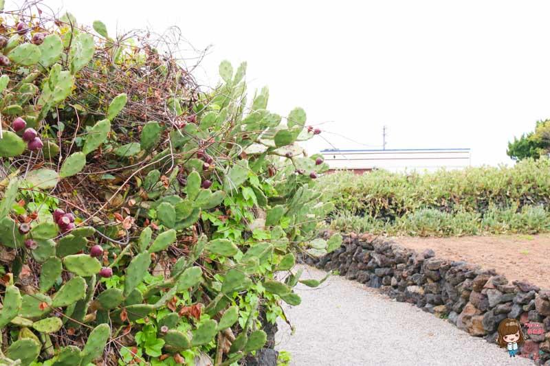 濟州島景點 月令里仙人掌群落