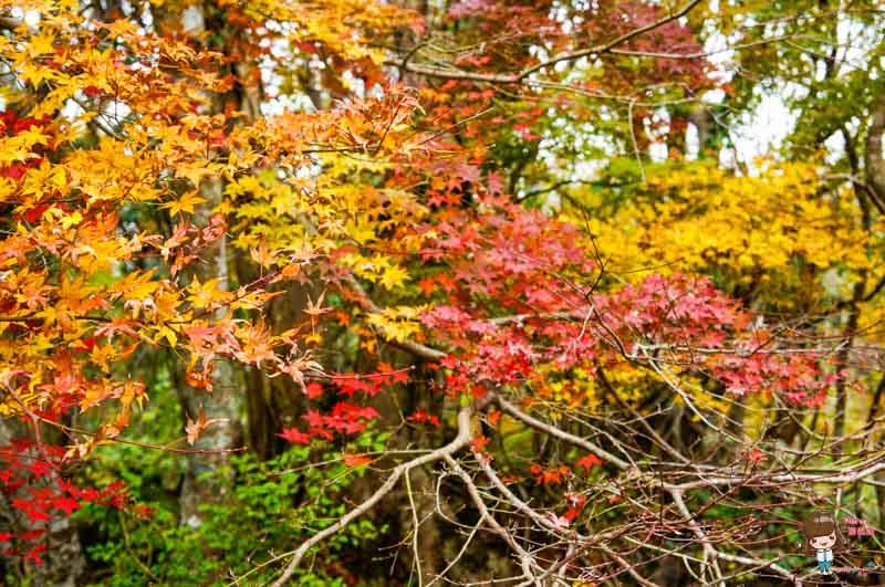 濟州島景點推薦 ECOLAND 森林小火車