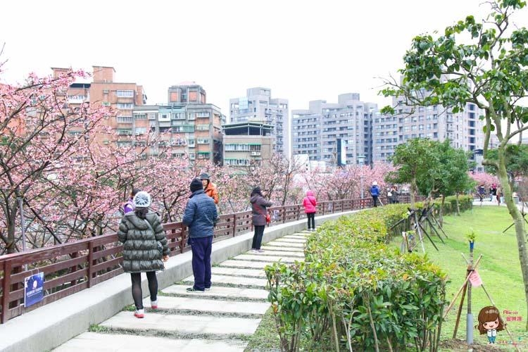 東湖櫻花林 樂活公園 內湖日夜櫻季 感受粉嫩櫻花的美