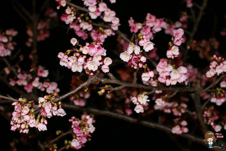台北賞櫻景點 東湖櫻花林 樂活公園 內湖日夜櫻季 感受粉嫩櫻花的美