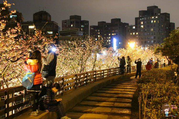 樂活公園夜櫻季