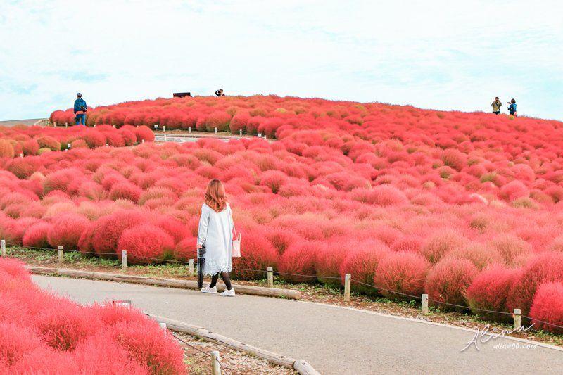 日本楓紅景點推薦 茨城國營常陸海濱公園