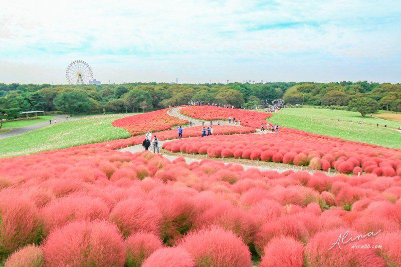 日本東京近郊 茨城 國營常陸海濱公園