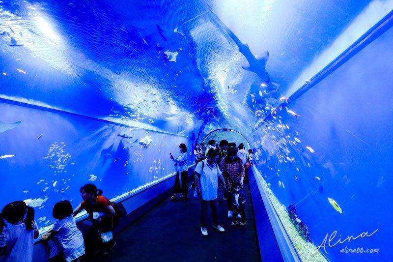 大阪海遊館 海底隧道