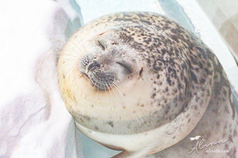 大阪海遊館 海豹
