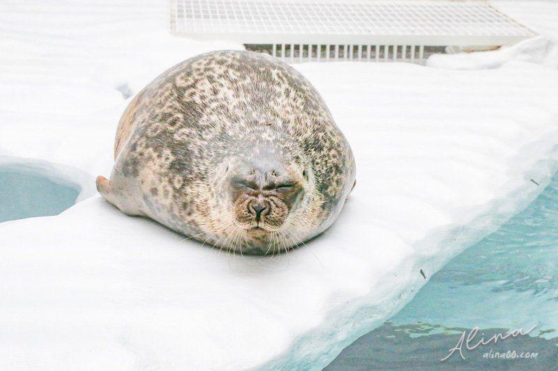 海遊館海豹