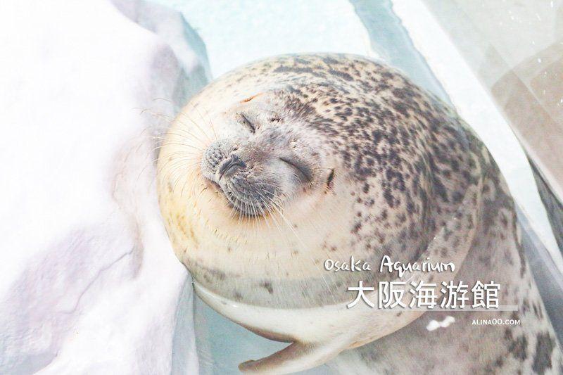 【大阪景點】大阪海遊館-可愛好玩的海洋水族館,海豹超療癒 @Alina 愛琳娜 嗑美食瘋旅遊