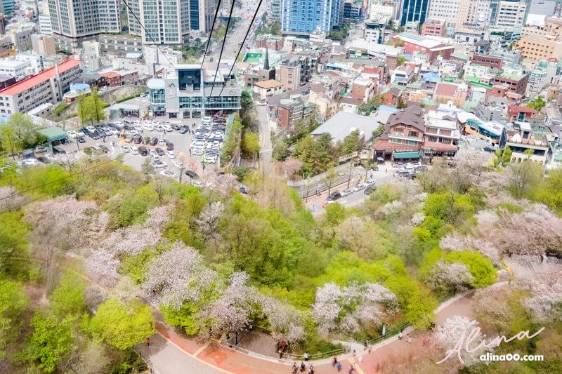 首爾塔 櫻花景點