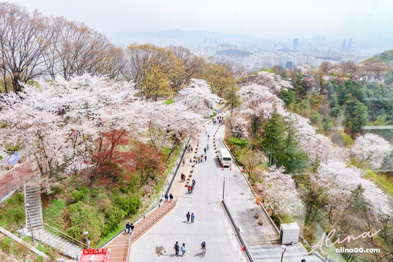 韓國首爾櫻花景點 首爾塔