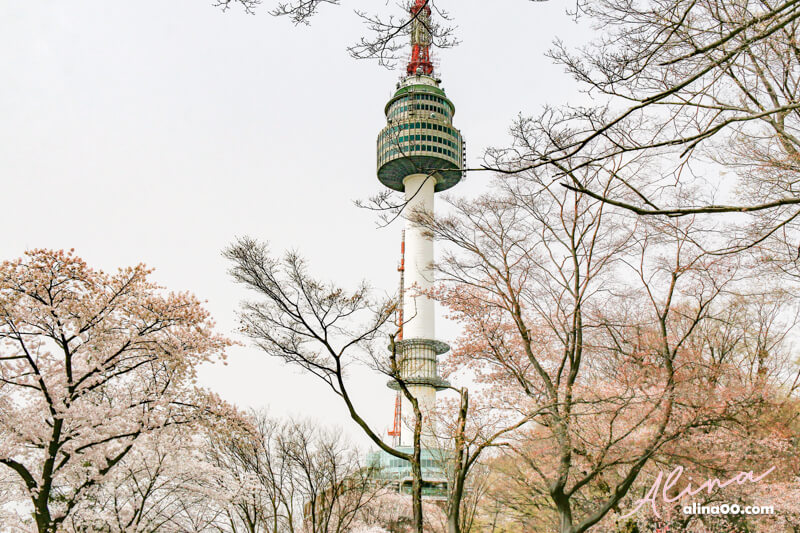 首爾櫻花景點推薦