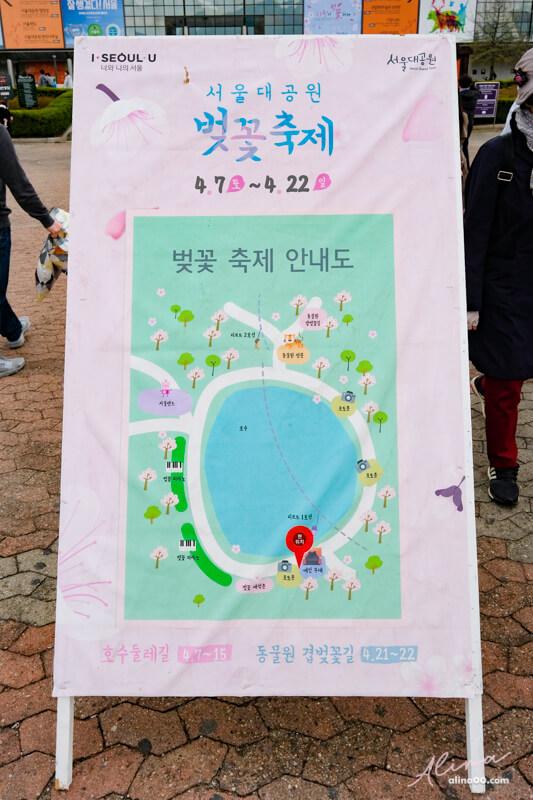 首爾大公園櫻花慶典