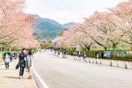 網站近期文章:【首爾景點】果川-首爾大公園-韓國首爾櫻花景點+親子遊行程推薦