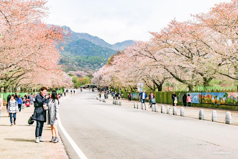 【首爾景點】首爾大公園-韓國櫻花景點,親子遊推薦首爾樂園+動物園 @Alina 愛琳娜 嗑美食瘋旅遊