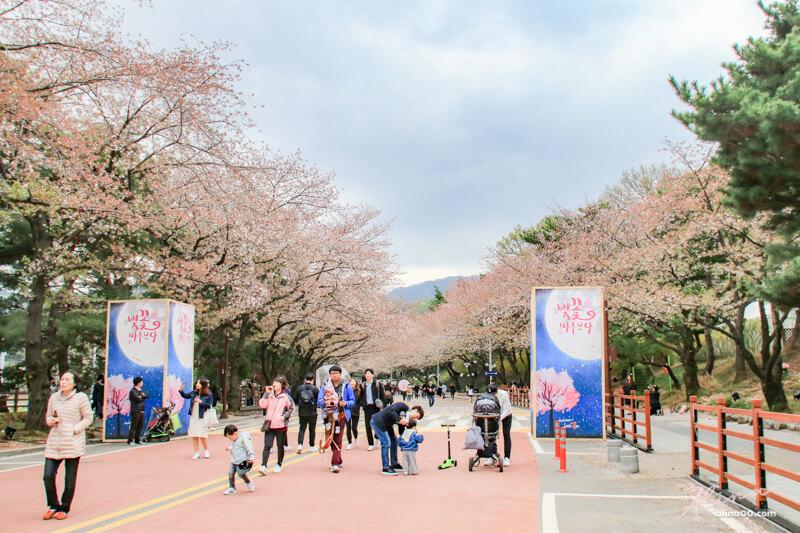 賽馬公園櫻花