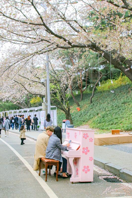 賽馬公園櫻花步道