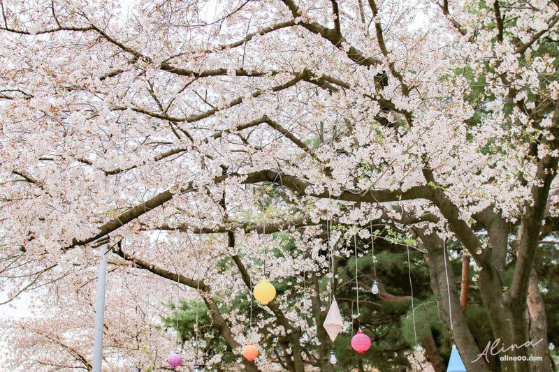 韓國首爾櫻花景點