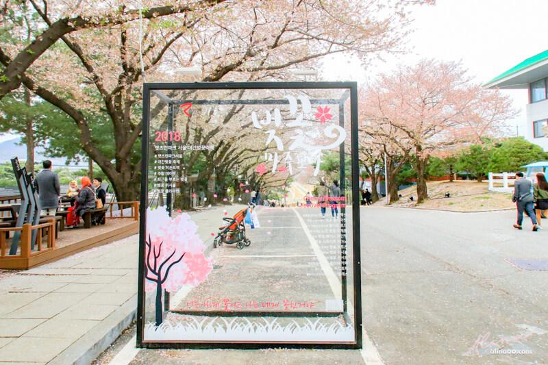 賽馬公園櫻花節拍照景點