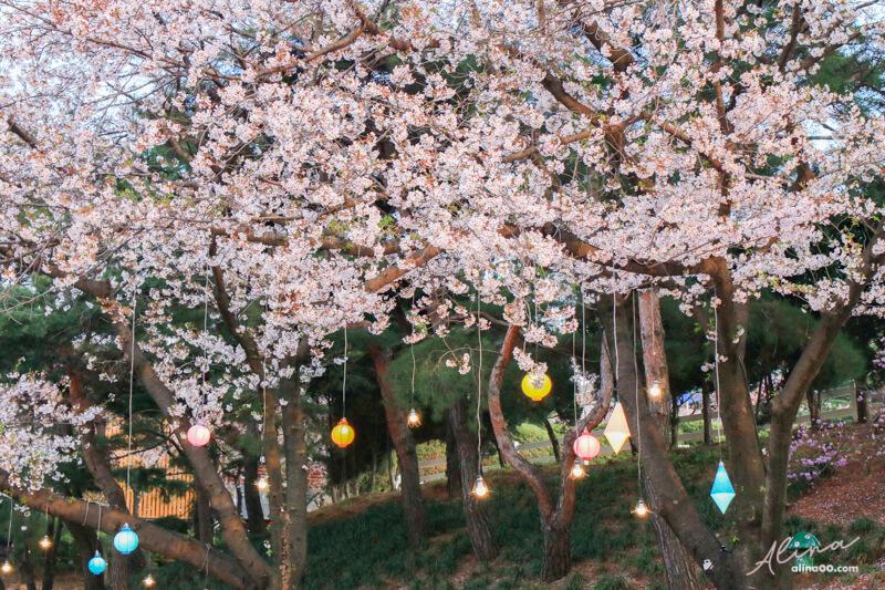 賽馬公園夜櫻節