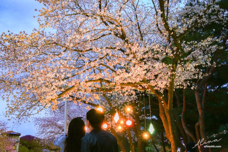 賽買公園櫻花慶典