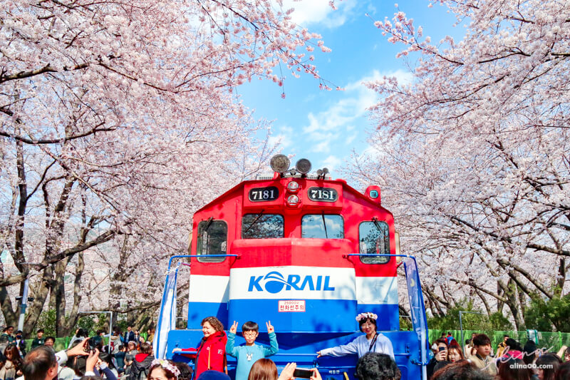 釜山櫻花景點 慶和站