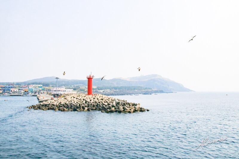 濟州島櫻花一日遊 牛島