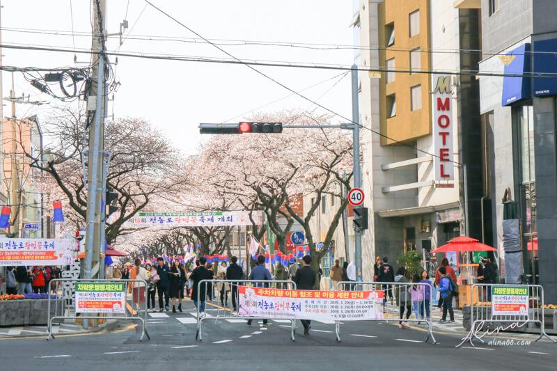 濟州島第一櫻花街