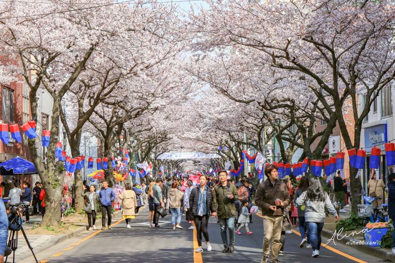 濟州島櫻花景點