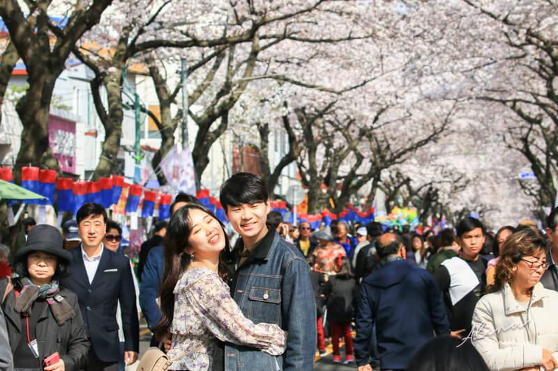 濟州島櫻花