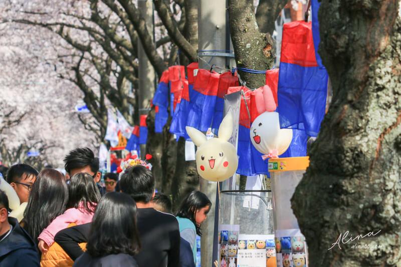 濟州島櫻花節