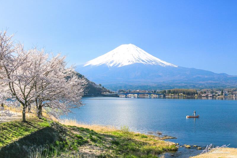 【日本景點】富士山 河口湖 交通攻略一日游,富士山櫻花景點推薦 @Alina 愛琳娜 嗑美食瘋旅遊