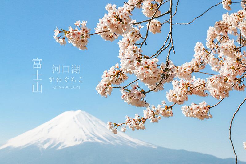 河口湖 富士山櫻花