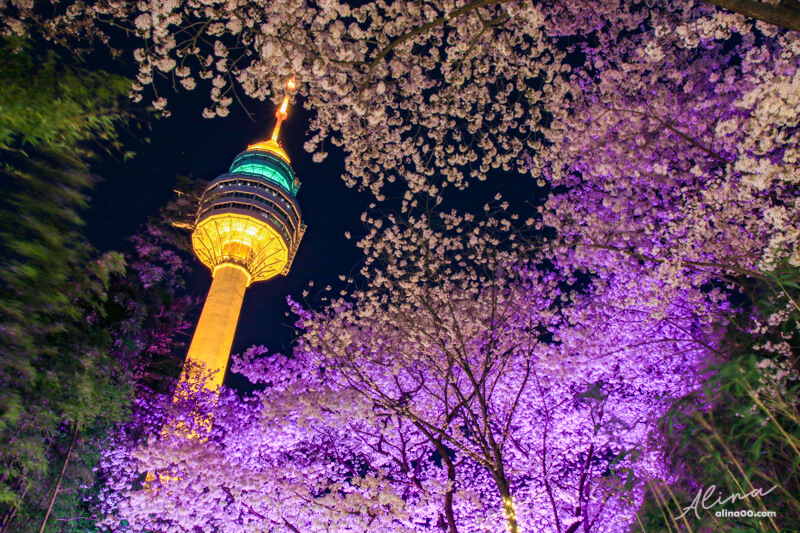 E-World 星光櫻花節