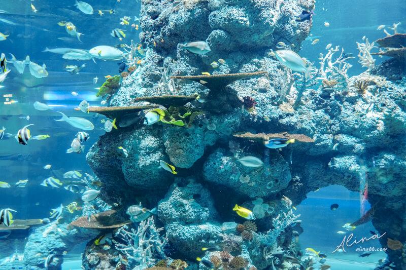 新加坡 S.E.A.海洋館