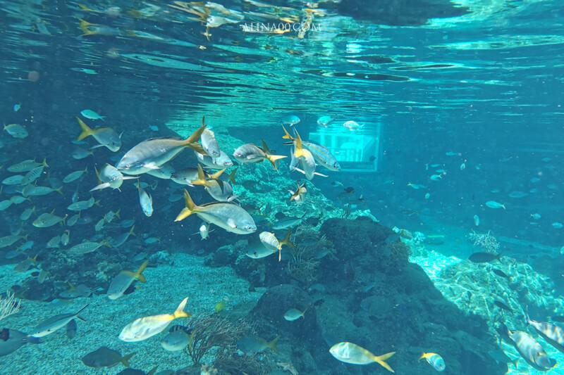 新加坡 水上探險樂園