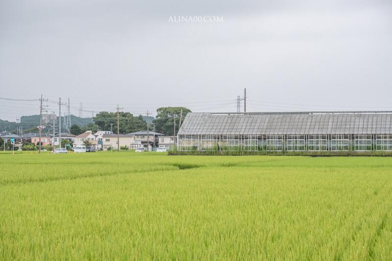 神奈川景點