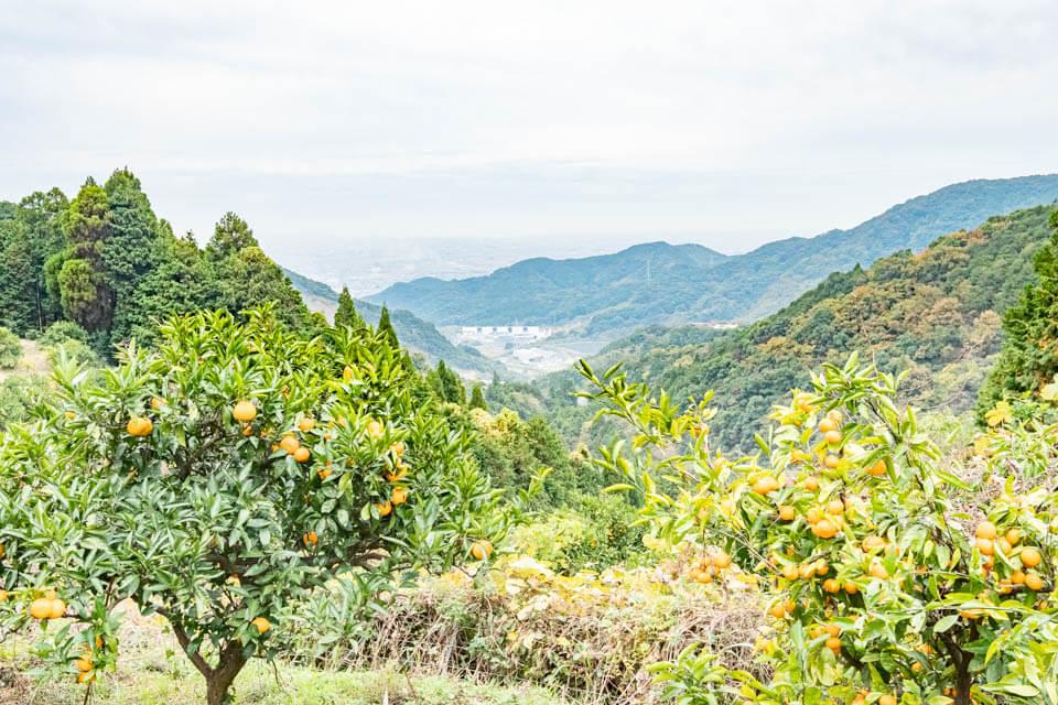 小城橘子園