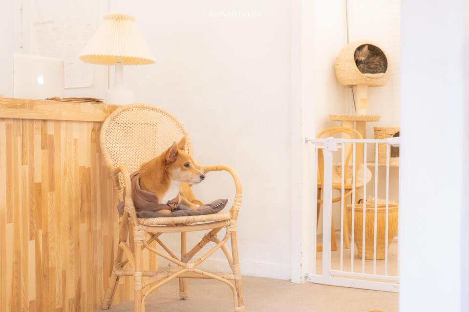 弘大寵物咖啡廳