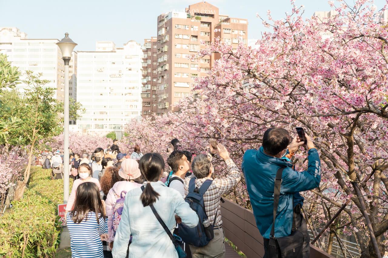 樂活公園櫻花季