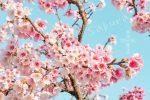 網站近期文章:【台北賞櫻景點】 東湖櫻花林 樂活公園|內湖日夜櫻季(2021花況滿開更新)
