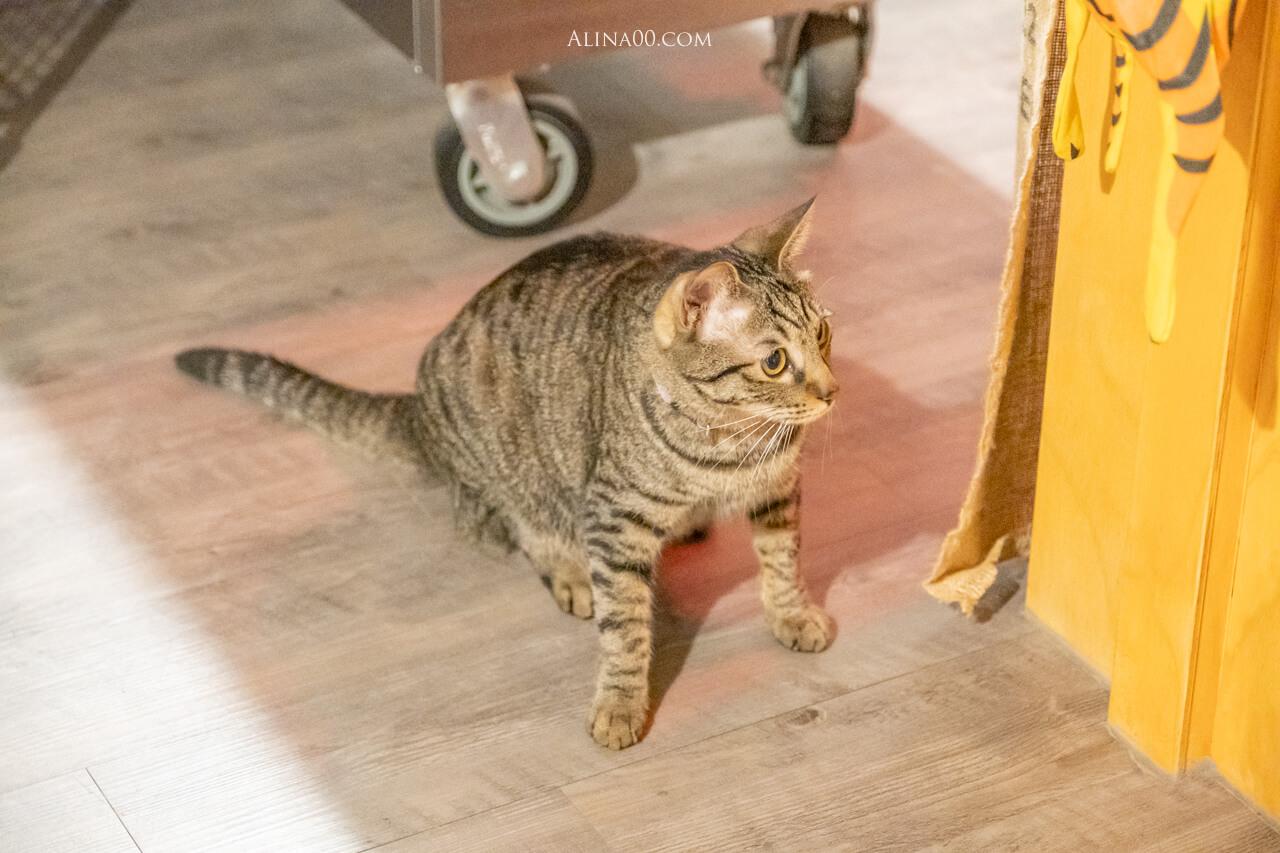 吉十咖啡店貓