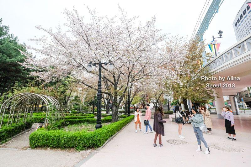 首爾石村湖櫻花節