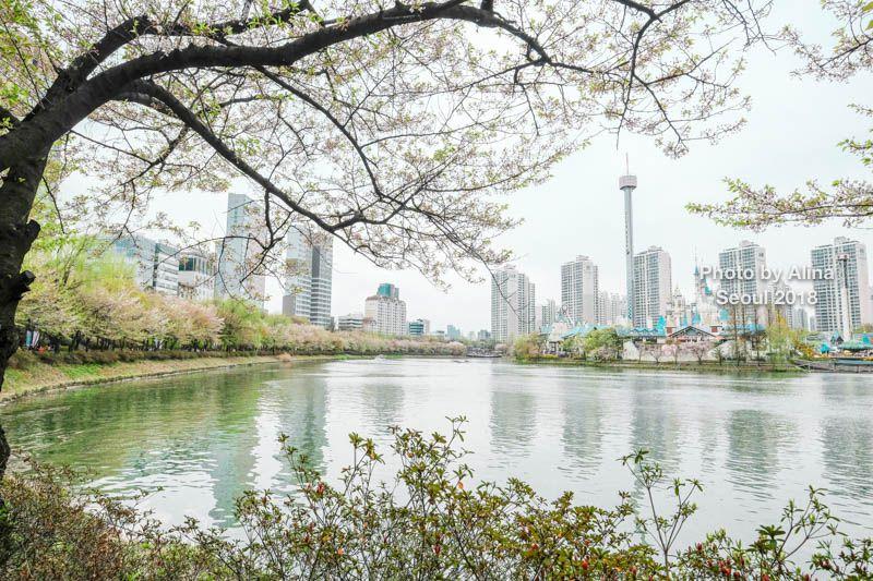 首爾櫻花景點 石村湖