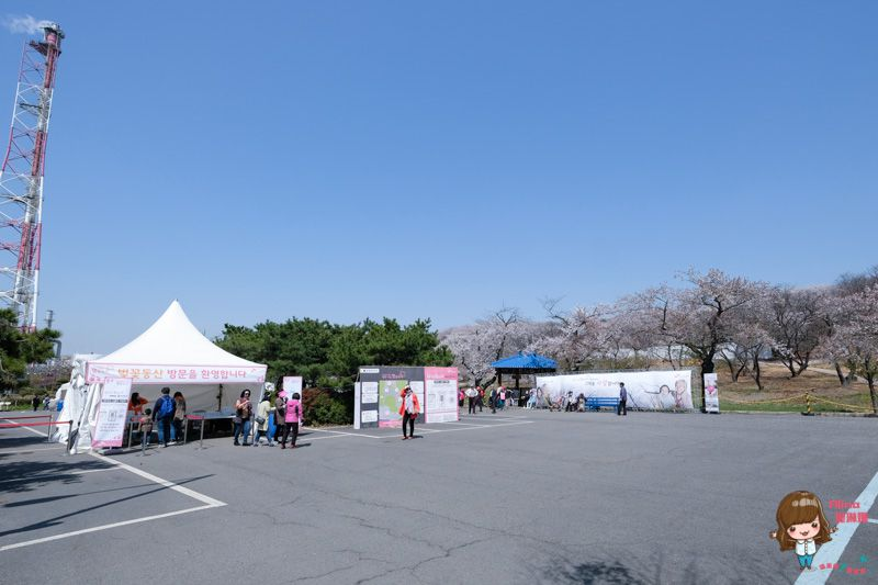 【首爾櫻花景點】仁川 SK石油化學櫻花公園:韓國櫻花大道秘境